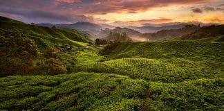 Singapur a Cameron Highlands