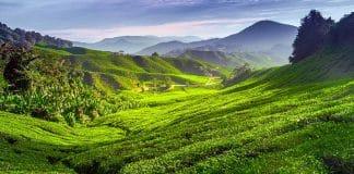 De Penang a Cameron Highlands